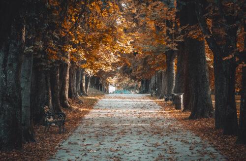 Bezbrižni mirisi jeseni nasleđeni iz školskih dana